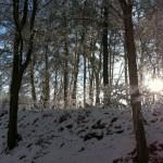 Bos in sneeuw met zon