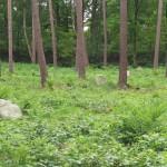 Stenen op het terrein